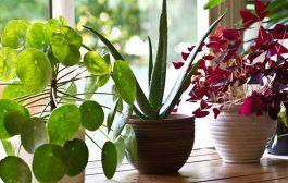 مراقبت از گیاهان آپارتمانی با 3 کار بسیار ساده