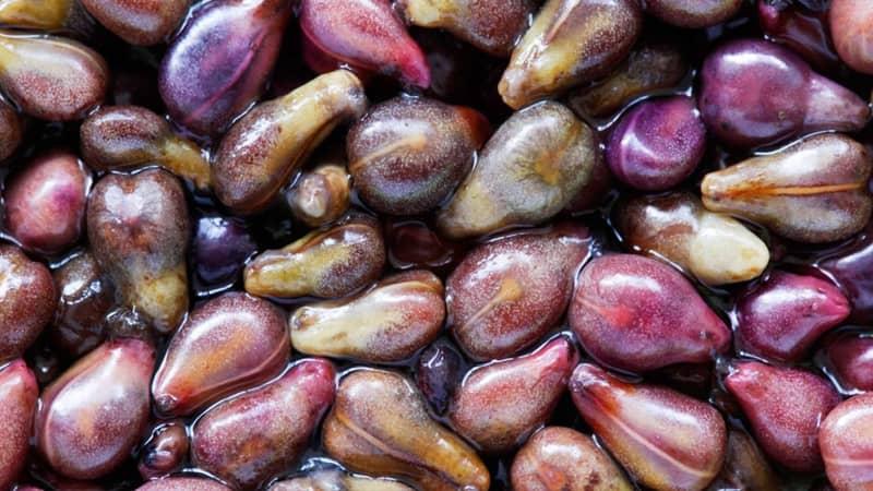 روغن هسته انگور برای جوش صورت
